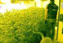 La Guardia Civil desarticula una organización dedicada al cultivo, elaboración y tráfico de drogas