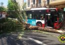 Díez heridos leves al chocar un autobús contra una palmera en el centro de Alicante