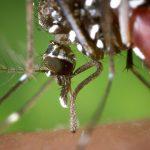 Estudiantes colombianos crean una trampa para eliminar el mosquito que trasmite el zika, dengue y chikungunya