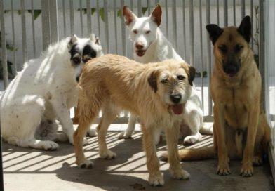 Felcan organiza una feria animalista y recaudará dinero para el nuevo refugio en Torrent